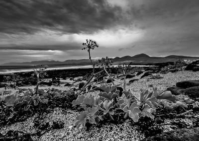 Pflanzen am Strand