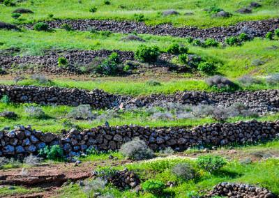 Terrassenfelder bei El Mojon